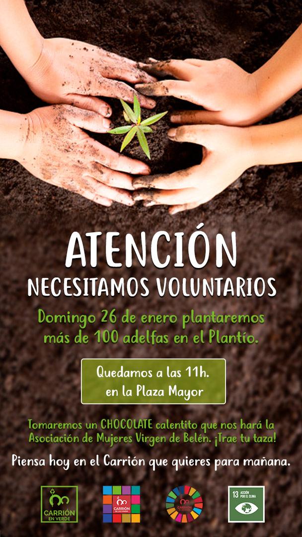 VOLUNTARIOS PARA PLANTAR ADELFAS